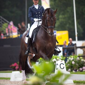 Stallion of the Year 2016 WCYH Ermelo